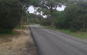 EstradaFlorestal 01